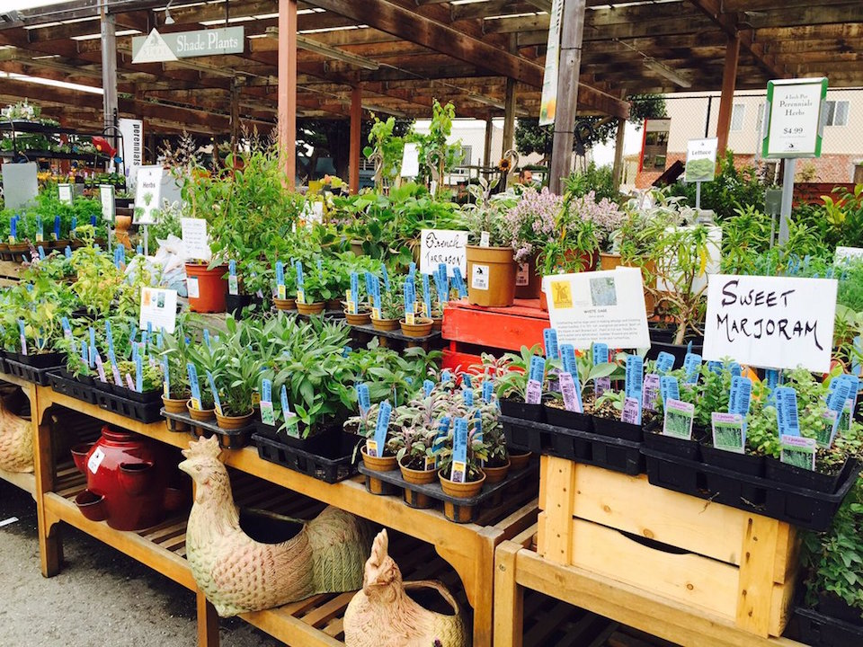 Tips for Organizing Your Garden Center Outlet